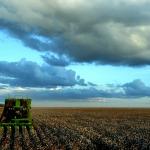 El biodiesel mata