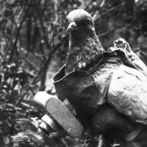 palomas-mensajerasI-guerra-mundíal